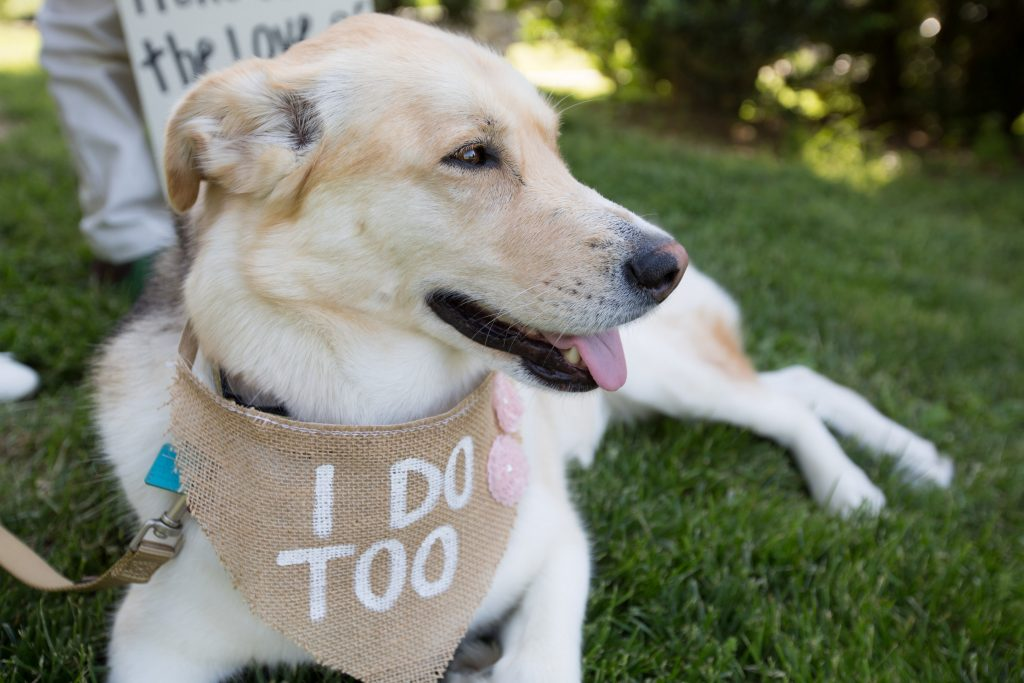 wedding dog with burlap bandana