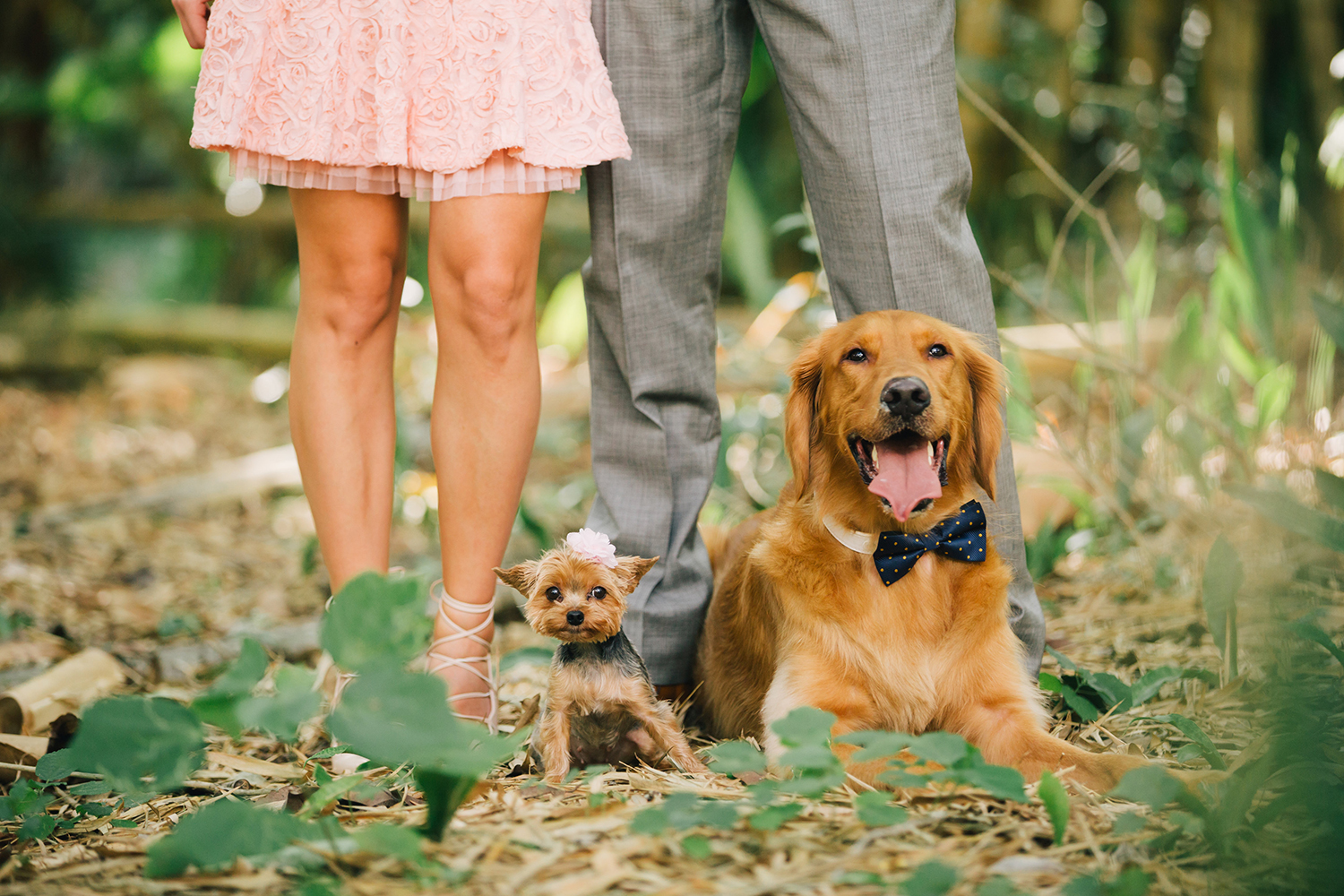 romantic engagement shoot in korashen park florida with dogs