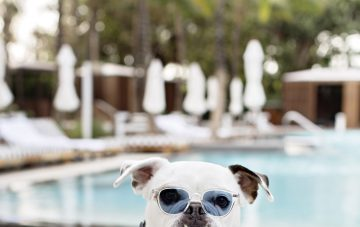 dog friendly honeymoon at W South Beach